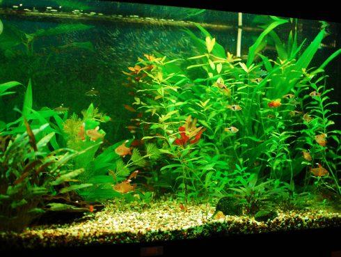 Feng shui akvárium halaknak