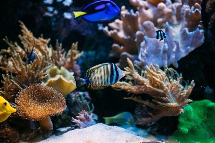 Akvarium gyerekeknek